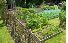 raised bed vegetable garden | Raised Bed Vegetable Garden