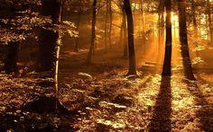 Nature's beauty.... Amazing click..