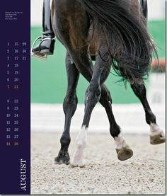 dressage on pinterest dressage horses equestrian and horses. Black Bedroom Furniture Sets. Home Design Ideas