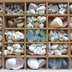 shells & seaglass - collected & sorted