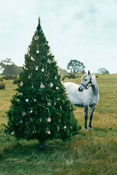 christmas #christmas