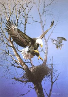 flight, bald eagl, magest bird, places, paintings
