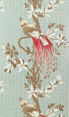 paradise bird wallpaper