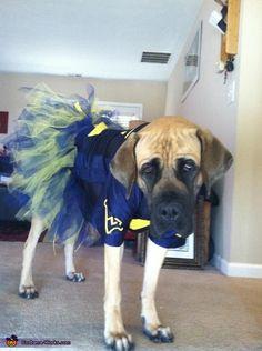 WVU Cheerleader Costume - 2012 Halloween Costume Contest
