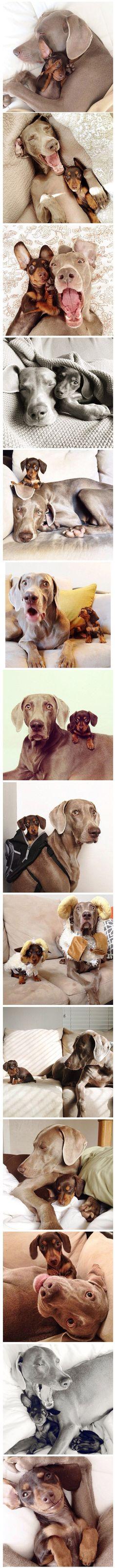 Precious doggie friendship!