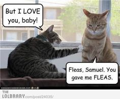 funny animals, laugh, fleas, funny pictures, funny cats, funny friday, funni, cat jokes, humor