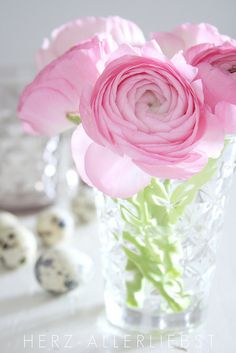 ranunculus. Beautiful