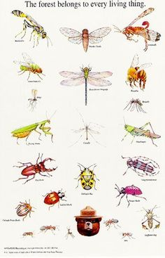 """Smokey's Insects - """"The forest belongs to every living thing"""" by National Association of State Foresters via apartmenttherapy. #Illustration #Poster #Vintage #Insects"""