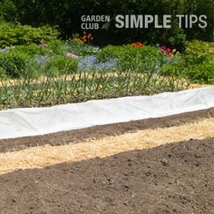 Harness the Sun to Kill Pests, Weeds and Diseases