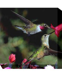 outdoor wall art, canva art, canvas art, 352 outdoor, hummingbird 352, outdoor artwork, outdoor canva, hummingbirds, wind hummingbird