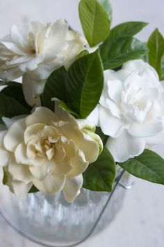 Gardenias in cut crystal- the traditional meaning of a gardenia is joy!