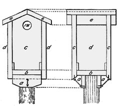 Blue bird house plan