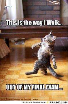 like a boss, funniest quotes, final exam, finals week, colleg, crazy cat lady, walk, last exam, true stories