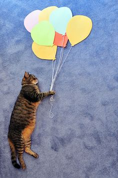 kitty flies with balloons