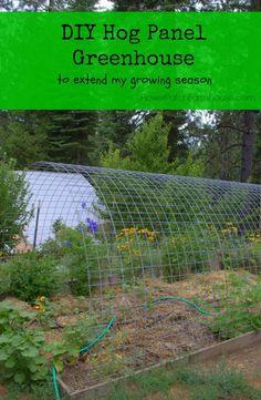 DIY Hog Panel Greenhouse