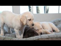 L.L.Bean sleepy puppies video