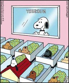 beagl, anim, funni, babi, ador, dog, awwww, snoopy funny, snoopy nursery