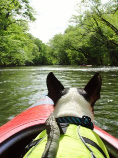 adventure dog, back home, dogs, terrier, lake, kayak, cano, friend, river