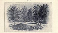 Mound Builders: Jefferson County, New York - Mound Builders Necropolis