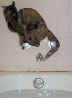 In the bath tub...