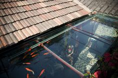 aqua roof. such a cool idea-i'm sure the it looks fantastic from inside as well