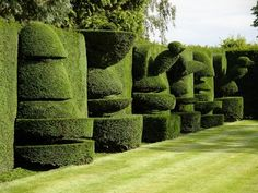Topiary in a private garden in North Yorkshire, England