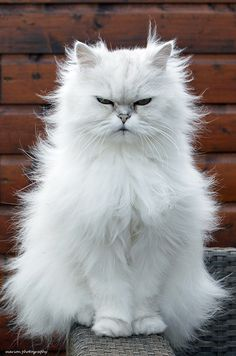 That's Mr. Fluffy to you!