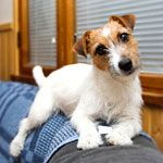 7 Products to Remove Dog Hair