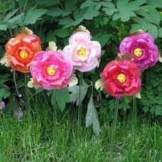 alice wand flowers