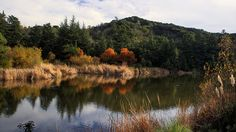 See Franklin Canyon Lake and the Sooky Goldman Nature Center