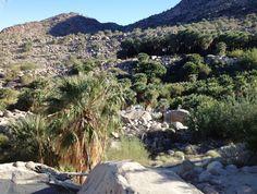 guadalupe canyon pal