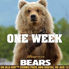 Introduce your family to this family. Take home Disneynature Bears on Blu-ray and Digital in one week. di.sn/hhU