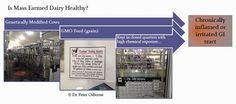 Dairy, gluten, and inflammation==>> http://www.glutenfreesociety.org/gluten-free-society-blog/is-dairy-sabotaging-your-gluten-free-healing/