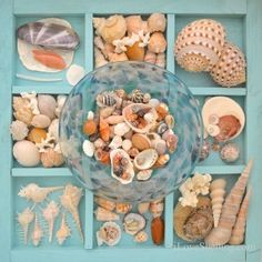 how to display shells collected on the beach of Thailand
