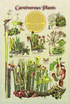 carnivorous plant chart