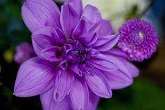 British summertime flowers