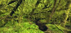Scotland - Temperate Rainforest by Kilian Schönberger, via 500px tree, temper rainforest, kilian schonberg, kilian schönberger
