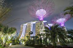 Shimmering Supertree