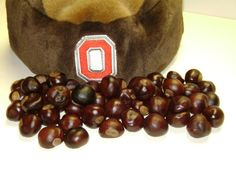 Ohio State Buckeye Nuts - Your choice, 25, 50, 75, or 100-For Necklaces,Crafts, or Floral Needs on Etsy, $3.99