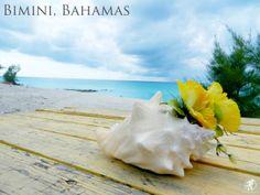 Beautiful Bimini Bahamas. #Caribbean #Bahamas