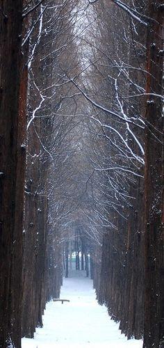pathway, winter trees, snow, company picnic, winter wonderland, forest, place, walk, south korea
