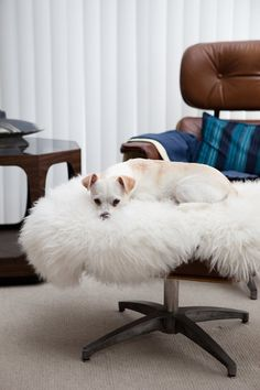 So Happy Together: Dogs on Sheepskins | Apartment Therapy