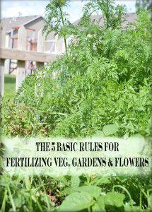 5 Basic rules for fertilizing your vegetable & flower gardens.