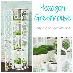 How to make a greenhouse out of an old curio cabinet