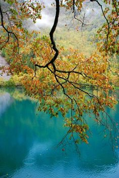 family pictures, water reflections, blue, color, peaceful places, family picture outfits, lake, tree branches, scenery photography