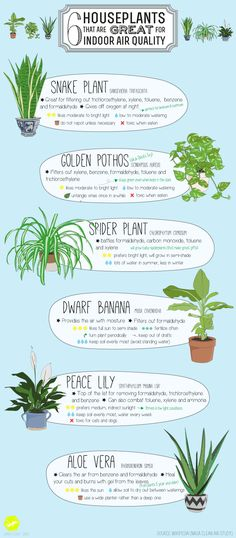 6 houseplants that a