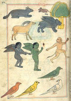 islam, illustrations, dates, bestiari, 17th century, art, india, illustrators, ink