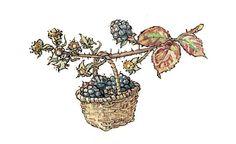 Blackberry harvest in Brambly Hedge
