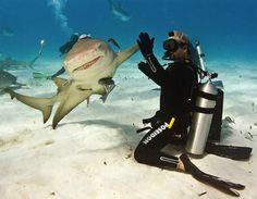 Have you hi 5d a shark today?