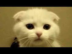 """CUTE TALKING KITTEN SAYS """"I'M NEW"""""""